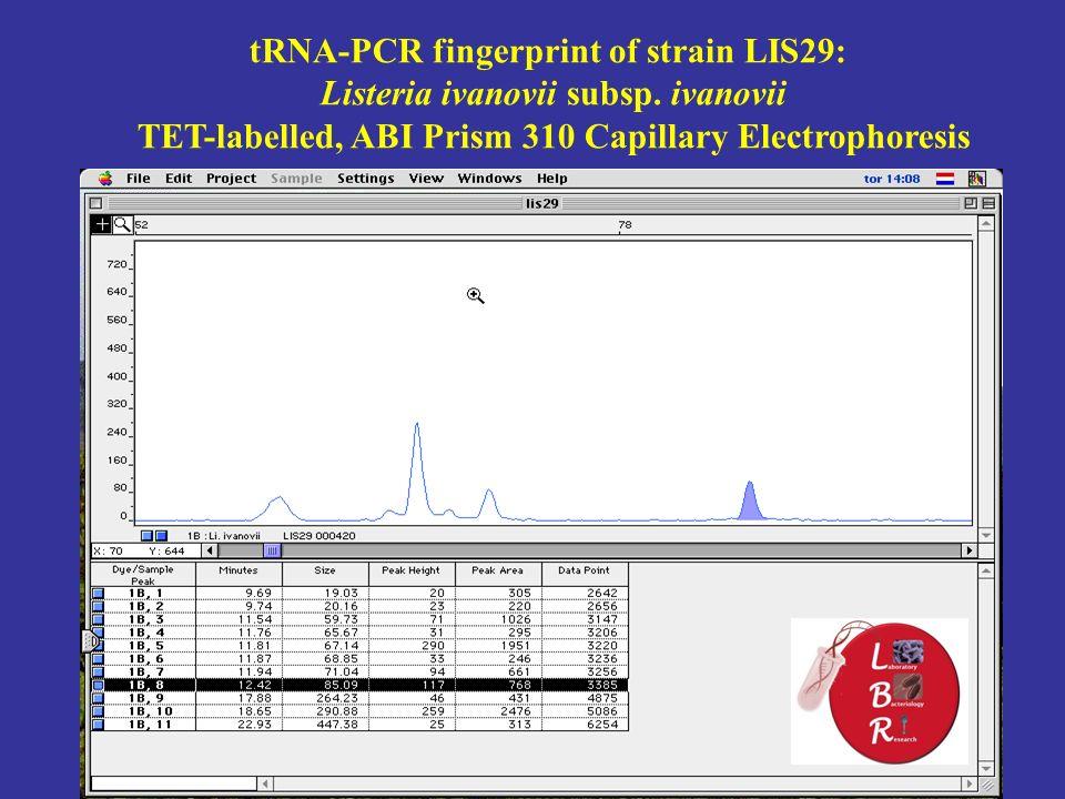 tRNA-PCR fingerprint of strain LIS29: Listeria ivanovii subsp.