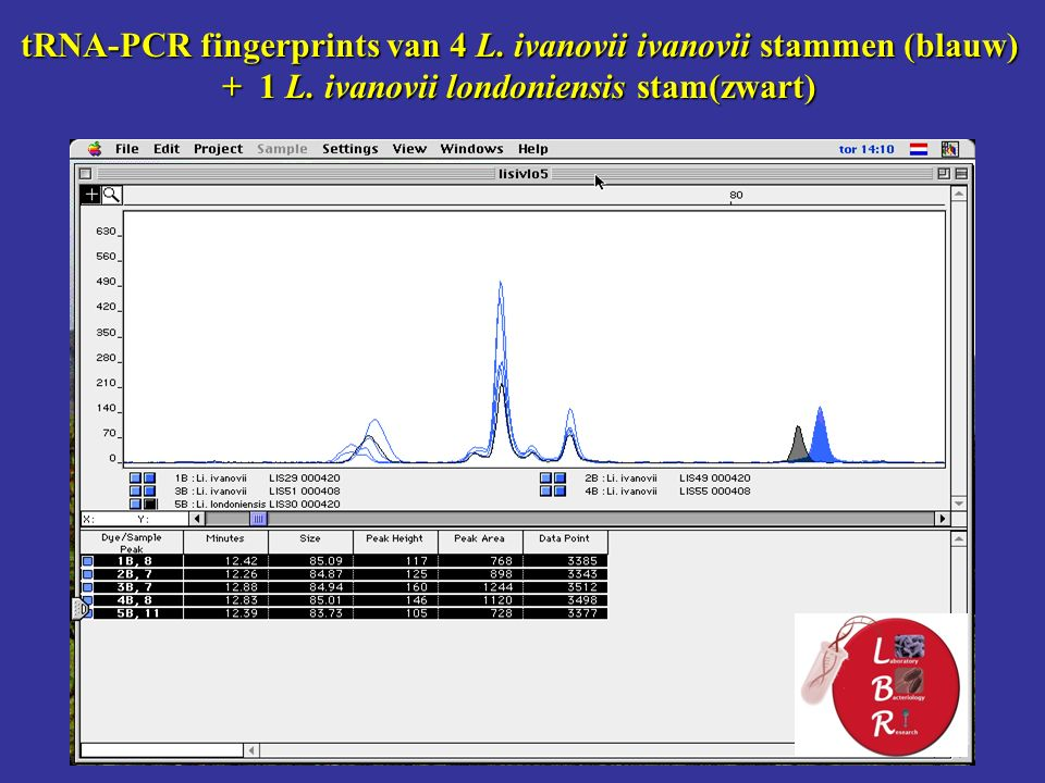 tRNA-PCR fingerprints van 4 L. ivanovii ivanovii stammen (blauw) + 1 L.