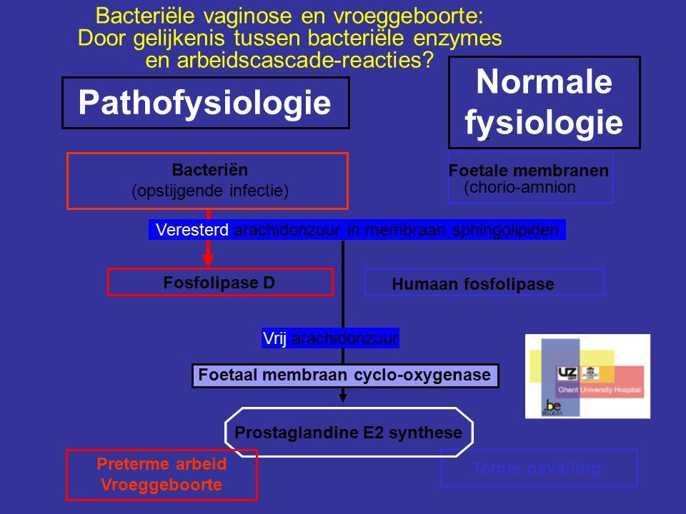 Foetale membranen (chorio-amnion - Terme bevalling Prostaglandine E2 synthese Humaan fosfolipase Fosfolipase D Preterme arbeid Vroeggeboorte Normale fysiologie Bacteriën (opstijgende infectie) Pathofysiologie Veresterd arachidonzuur in membraan sphingolipiden Vrij arachidonzuur Foetaal membraan cyclo-oxygenase Bacteriële vaginose en vroeggeboorte: Door gelijkenis tussen bacteriële enzymes en arbeidscascade-reacties