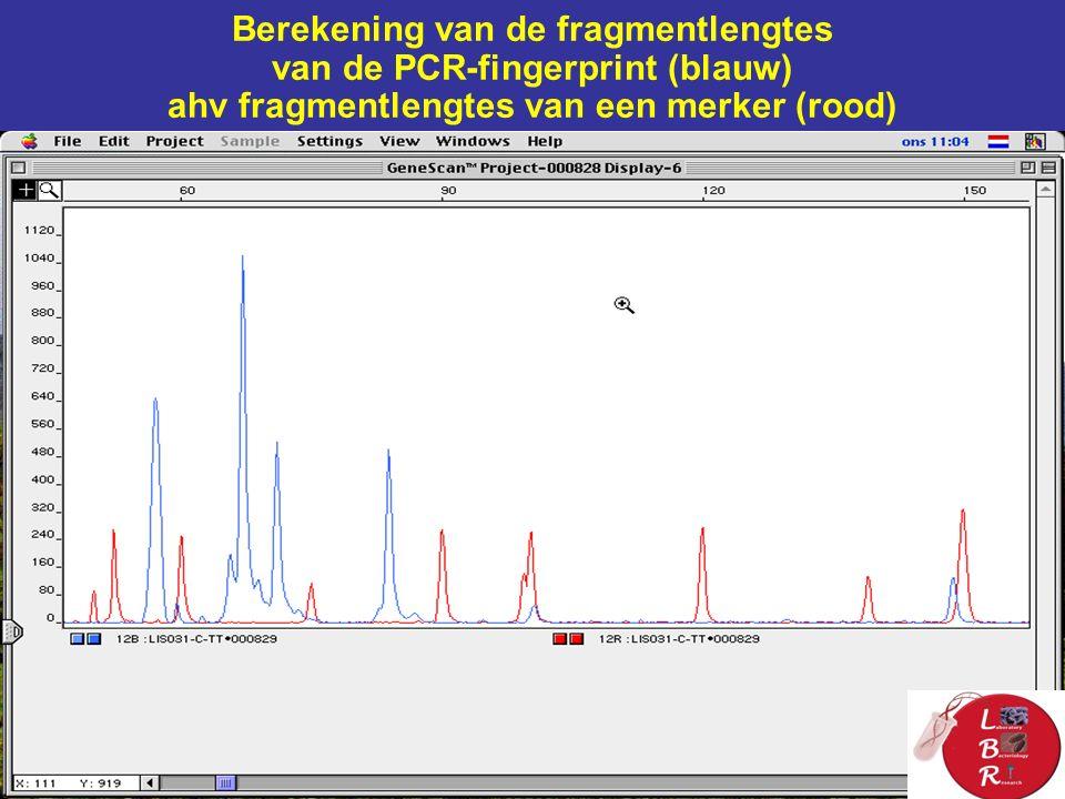 Berekening van de fragmentlengtes van de PCR-fingerprint (blauw) ahv fragmentlengtes van een merker (rood)