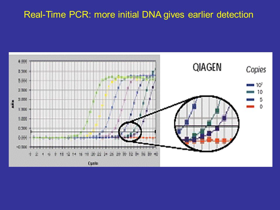 Real-Time PCR: more initial DNA gives earlier detection