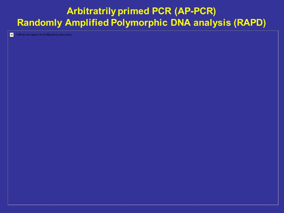 Arbitratrily primed PCR (AP-PCR) Randomly Amplified Polymorphic DNA analysis (RAPD)