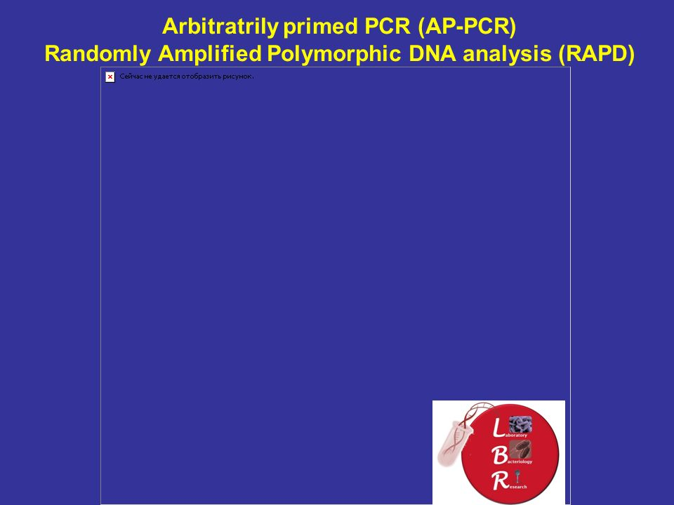 Arbitratrily primed PCR (AP-PCR) Randomly Amplified Polymorphic DNA analysis (RAPD)