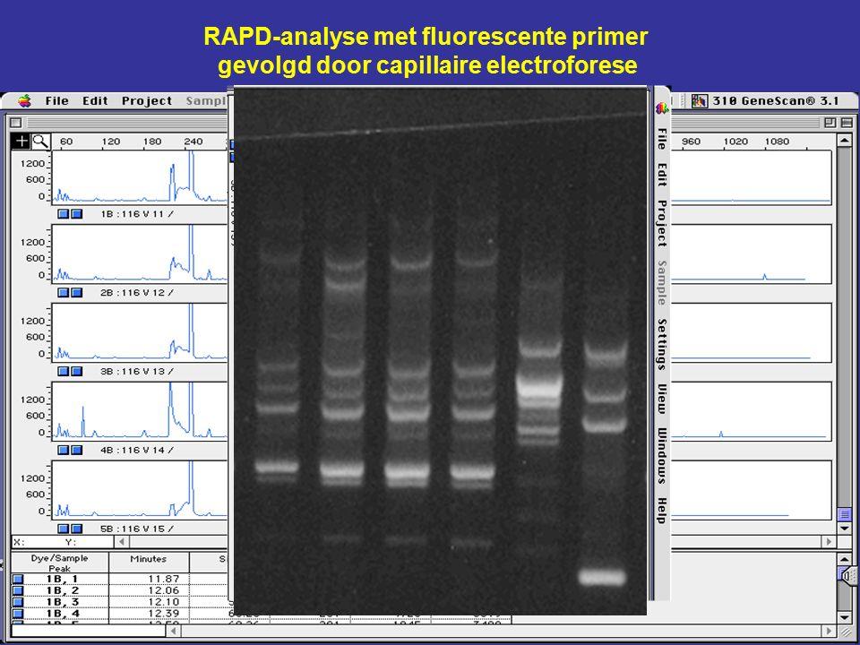 RAPD-analyse met fluorescente primer gevolgd door capillaire electroforese