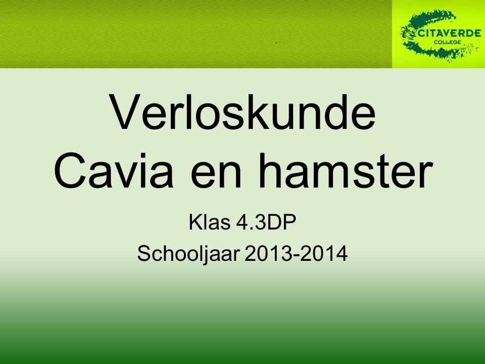 Verloskunde Cavia en hamster Klas 4.3DP Schooljaar 2013-2014