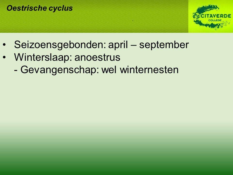 Oestrische cyclus Seizoensgebonden: april – september Winterslaap: anoestrus - Gevangenschap: wel winternesten