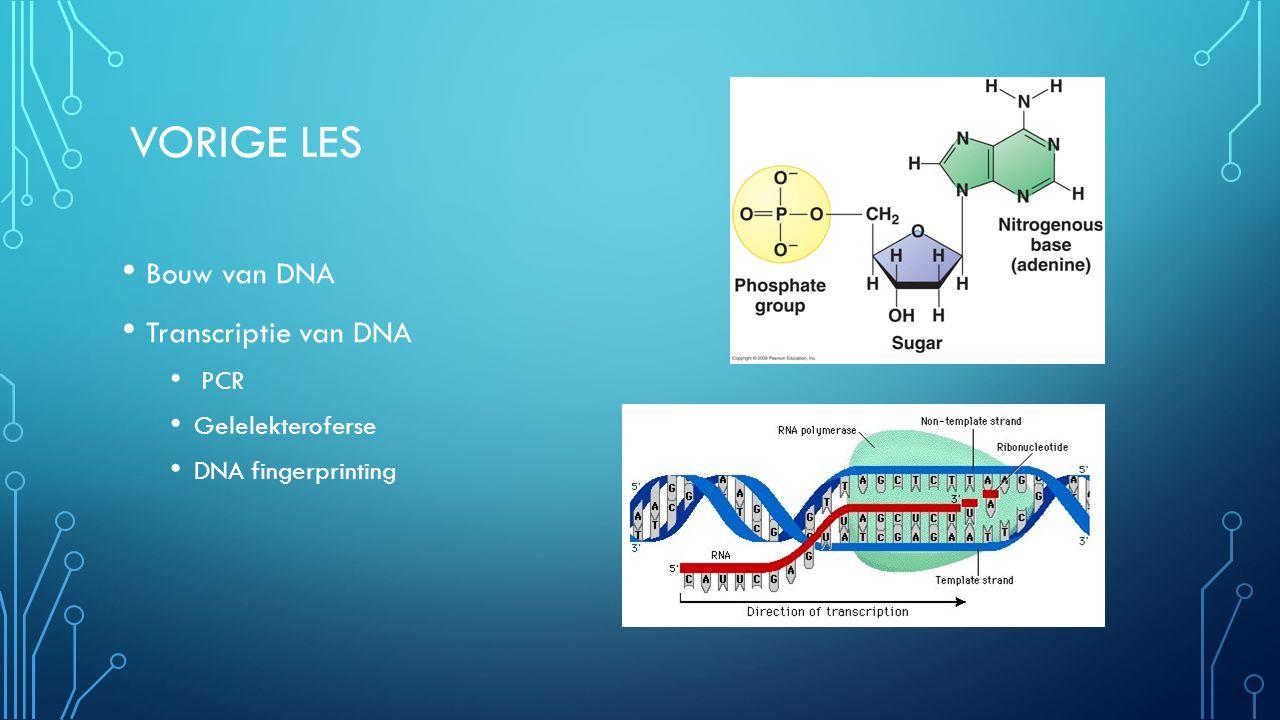 VORIGE LES Bouw van DNA Transcriptie van DNA PCR Gelelekteroferse DNA fingerprinting