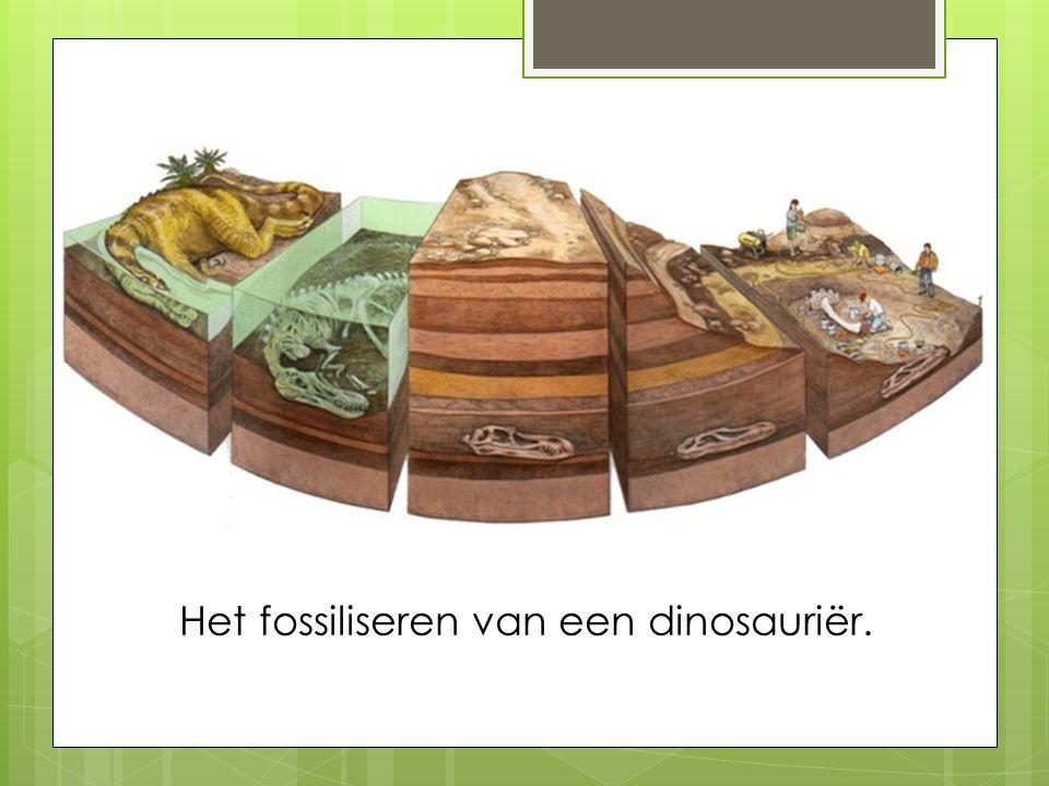 Het fossiliseren van een dinosauriër.