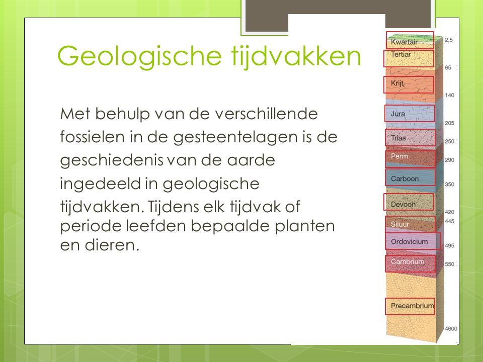Geologische tijdvakken Met behulp van de verschillende fossielen in de gesteentelagen is de geschiedenis van de aarde ingedeeld in geologische tijdvakken.