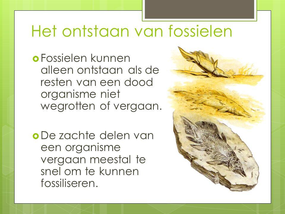Het ontstaan van fossielen  Fossielen kunnen alleen ontstaan als de resten van een dood organisme niet wegrotten of vergaan.  De zachte delen van ee