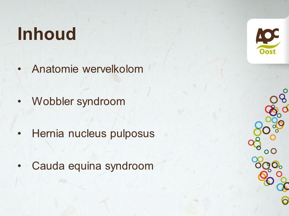 Inhoud Anatomie wervelkolom Wobbler syndroom Hernia nucleus pulposus Cauda equina syndroom