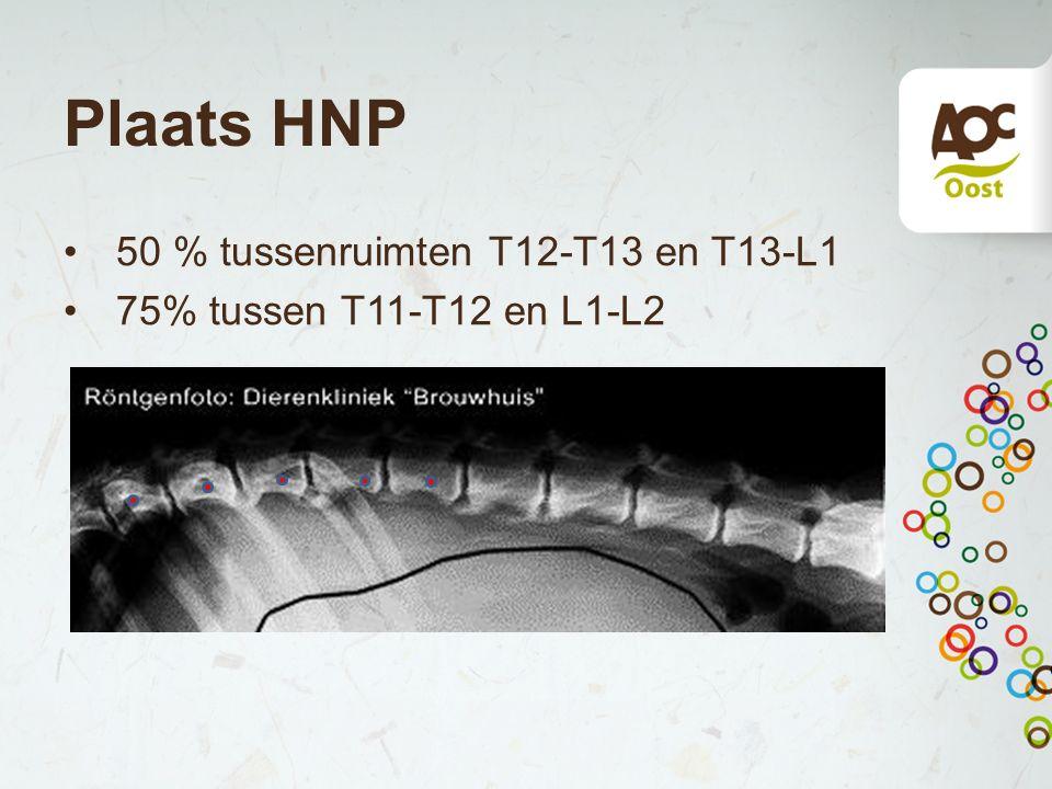 Plaats HNP 50 % tussenruimten T12-T13 en T13-L1 75% tussen T11-T12 en L1-L2
