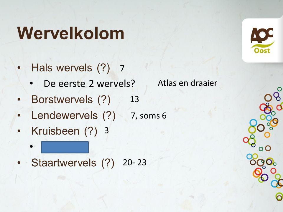 Wervelkolom Hals wervels (?) De eerste 2 wervels? Borstwervels (?) Lendewervels (?) Kruisbeen (?) vergroeid Staartwervels (?) 7 Atlas en draaier 13 7,
