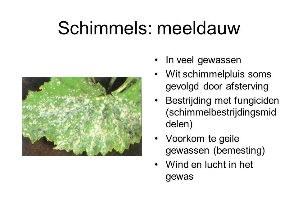 Schimmels: meeldauw In veel gewassen Wit schimmelpluis soms gevolgd door afsterving Bestrijding met fungiciden (schimmelbestrijdingsmid delen) Voorkom