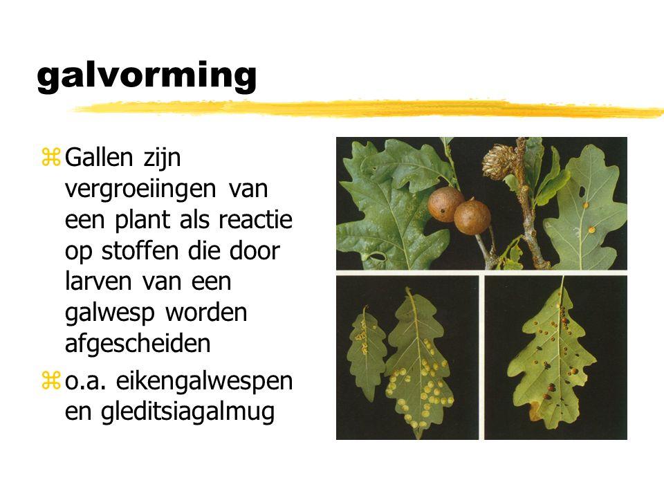 galvorming zGallen zijn vergroeiingen van een plant als reactie op stoffen die door larven van een galwesp worden afgescheiden zo.a.