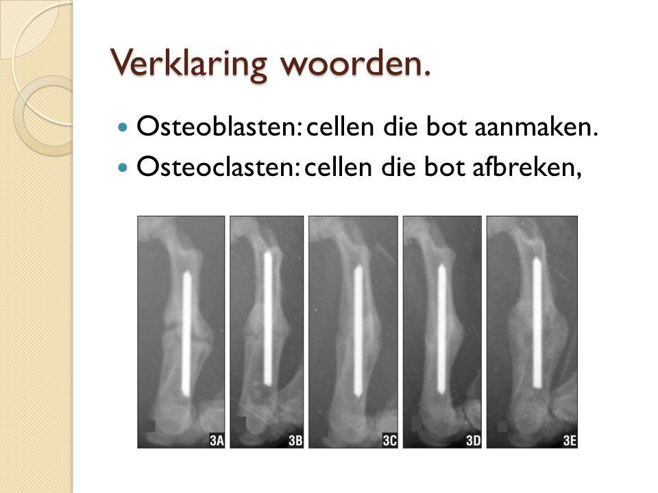 Verklaring woorden. Osteoblasten: cellen die bot aanmaken. Osteoclasten: cellen die bot afbreken,