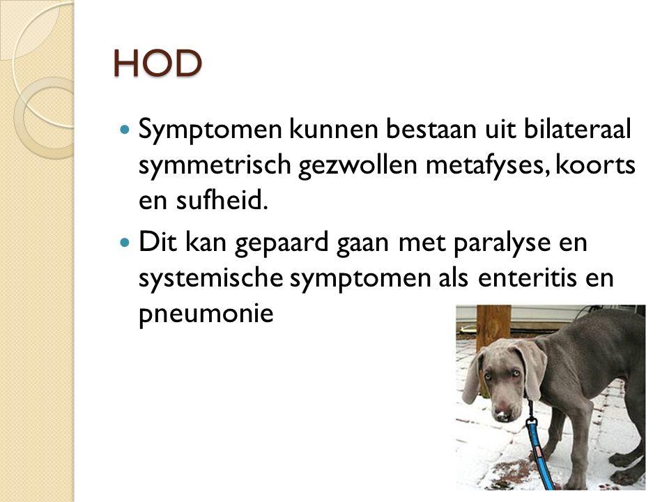 HOD Symptomen kunnen bestaan uit bilateraal symmetrisch gezwollen metafyses, koorts en sufheid. Dit kan gepaard gaan met paralyse en systemische sympt