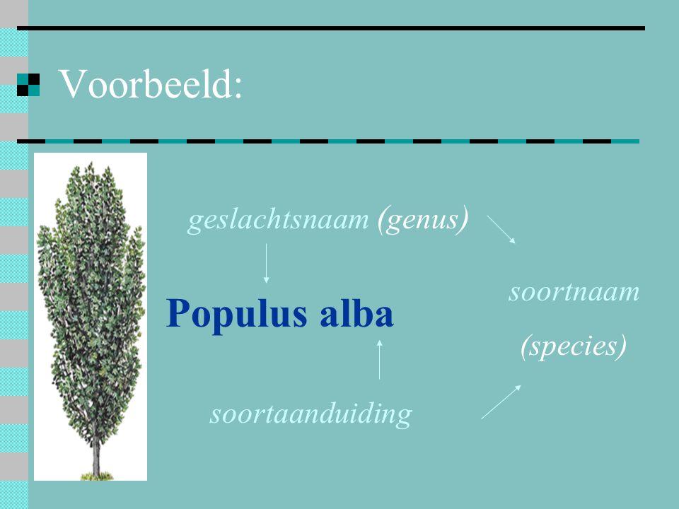 Voorbeeld: Populus alba geslachtsnaam ( genus ) soortaanduiding soortnaam (species)