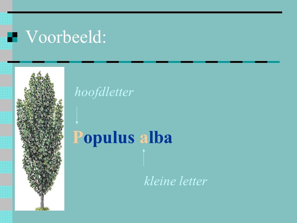 Voorbeeld: Populus alba hoofdletter kleine letter