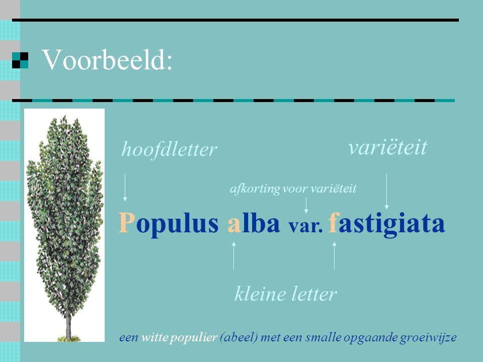 Voorbeeld: Populus alba var. fastigiata hoofdletter kleine letter een witte populier (abeel) met een smalle opgaande groeiwijze variëteit afkorting vo