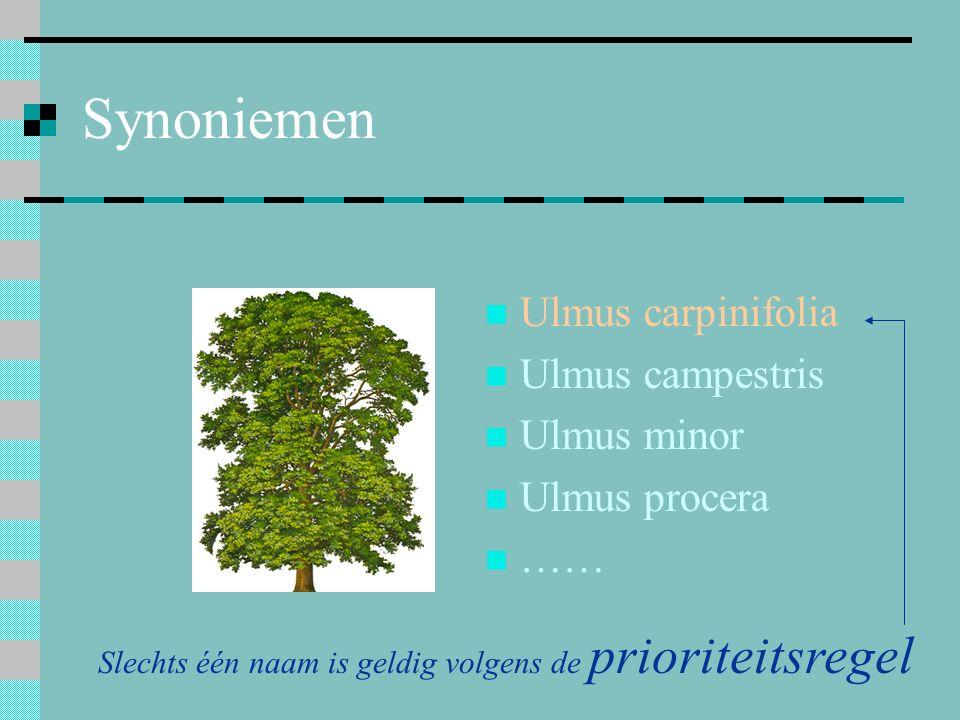 Synoniemen Ulmus carpinifolia Ulmus campestris Ulmus minor Ulmus procera …… Slechts één naam is geldig volgens de prioriteitsregel