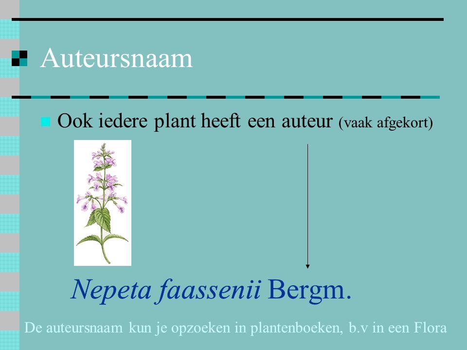 Auteursnaam Ook iedere plant heeft een auteur (vaak afgekort) Nepeta faassenii Nepeta faassenii Bergm. De auteursnaam kun je opzoeken in plantenboeken