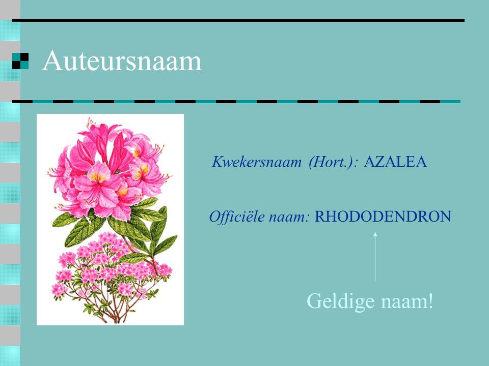 Auteursnaam Kwekersnaam (Hort.): AZALEA Officiële naam: RHODODENDRON Geldige naam!
