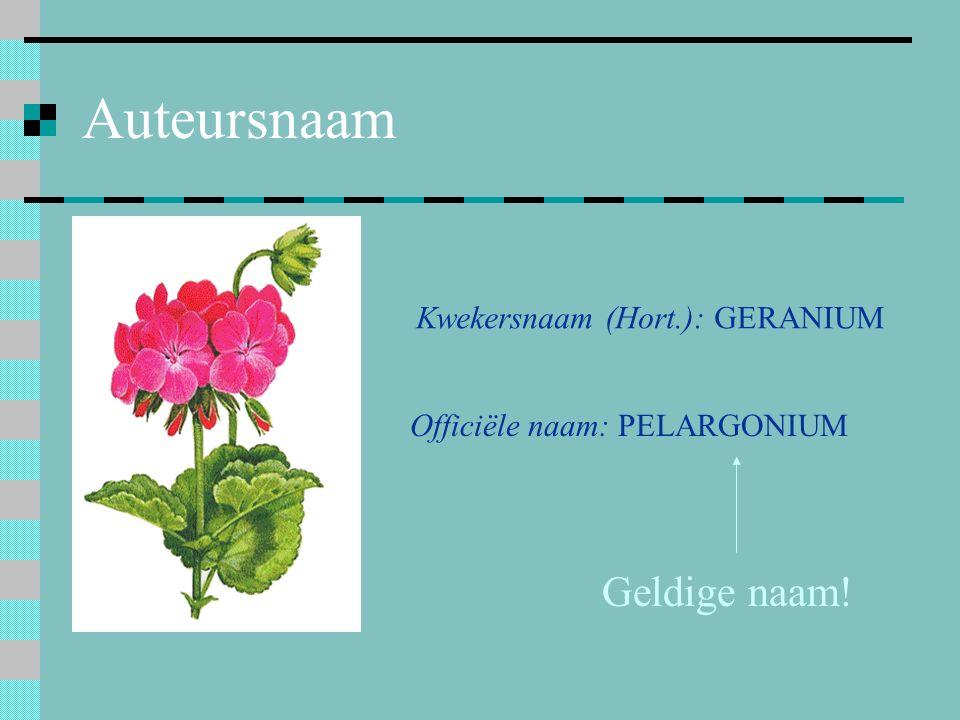 Auteursnaam Kwekersnaam (Hort.): GERANIUM Officiële naam: PELARGONIUM Geldige naam!
