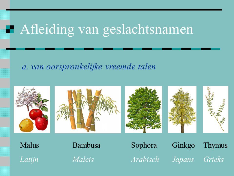 Afleiding van geslachtsnamen a. van oorspronkelijke vreemde talen Malus Latijn Bambusa Maleis Sophora Arabisch Ginkgo Japans Thymus Grieks