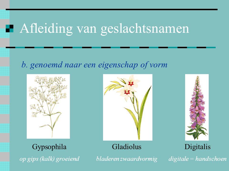 Afleiding van geslachtsnamen b. genoemd naar een eigenschap of vorm Gypsophila op gips (kalk) groeiend Gladiolus bladeren zwaardvormig Digitalis digit