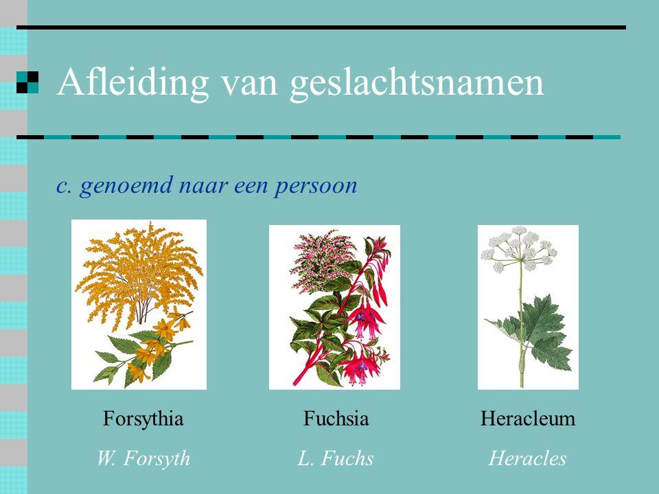 Afleiding van geslachtsnamen c. genoemd naar een persoon Forsythia W. Forsyth Fuchsia L. Fuchs Heracleum Heracles