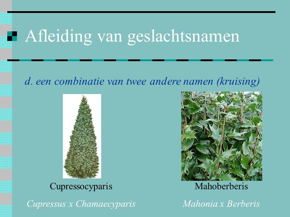 Afleiding van geslachtsnamen d. een combinatie van twee andere namen (kruising) Cupressocyparis Cupressus x Chamaecyparis Mahoberberis Mahonia x Berbe