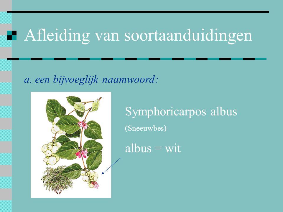 Afleiding van soortaanduidingen a. een bijvoeglijk naamwoord: Symphoricarpos albus (Sneeuwbes) albus = wit