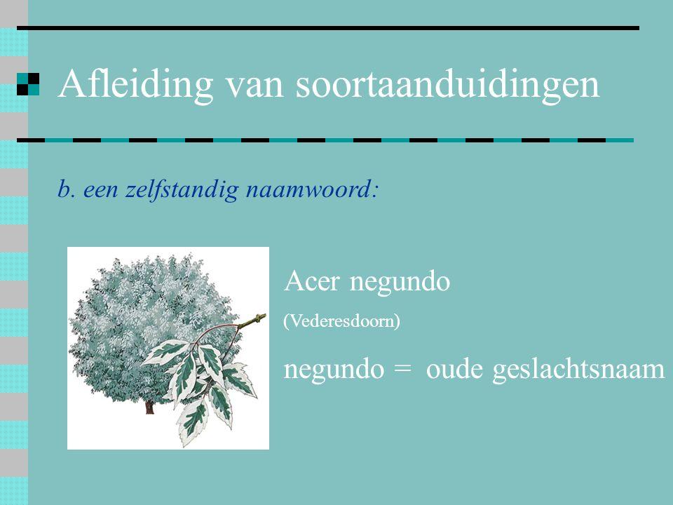 Afleiding van soortaanduidingen b. een zelfstandig naamwoord: Acer negundo (Vederesdoorn) negundo = oude geslachtsnaam