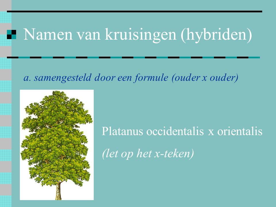 Namen van kruisingen (hybriden) a. samengesteld door een formule (ouder x ouder) Platanus occidentalis x orientalis (let op het x-teken)