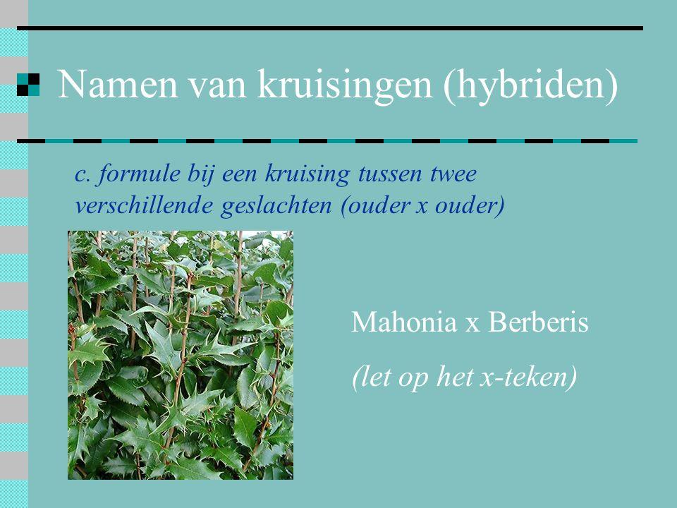 Namen van kruisingen (hybriden) c. formule bij een kruising tussen twee verschillende geslachten (ouder x ouder) Mahonia x Berberis (let op het x-teke