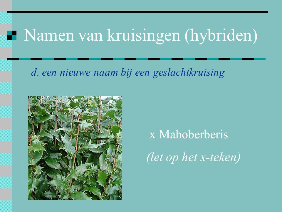 Namen van kruisingen (hybriden) d. een nieuwe naam bij een geslachtkruising x Mahoberberis (let op het x-teken)