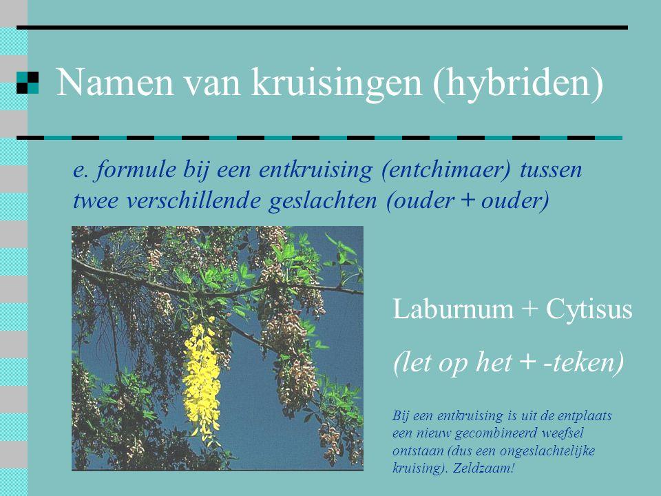 Namen van kruisingen (hybriden) e. formule bij een entkruising (entchimaer) tussen twee verschillende geslachten (ouder + ouder) Laburnum + Cytisus (l