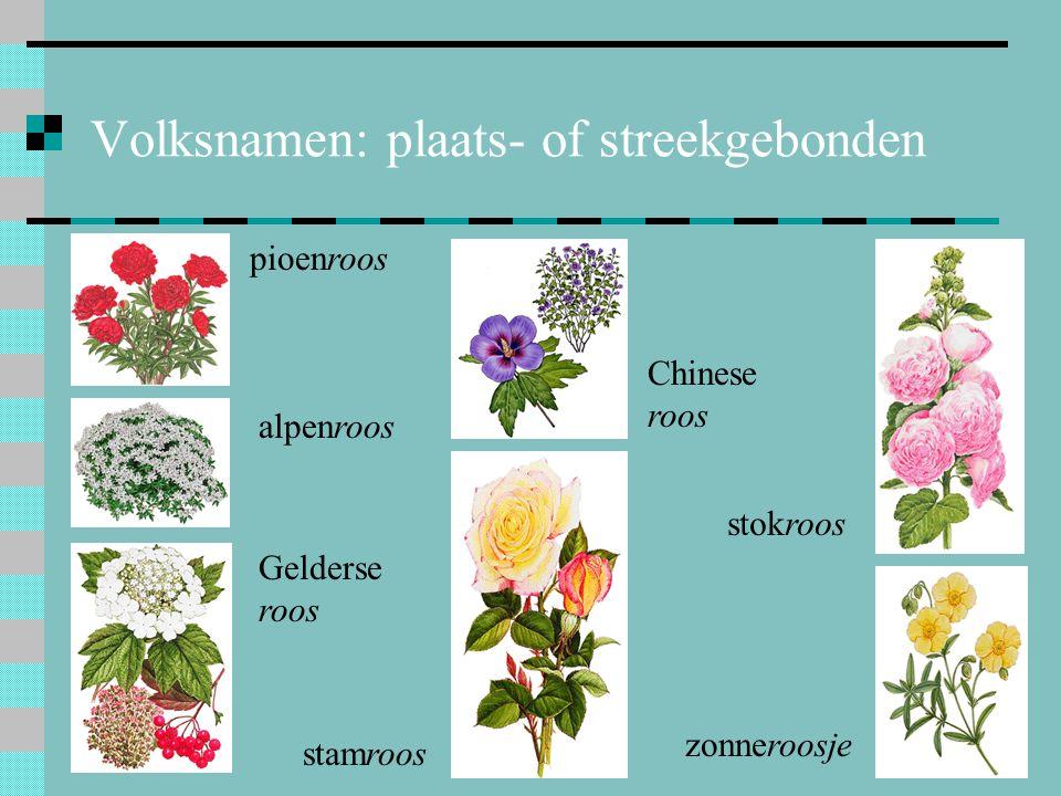 Volksnamen: plaats- of streekgebonden pioenroos alpenroos Gelderse roos stamroos stokroos zonneroosje Chinese roos