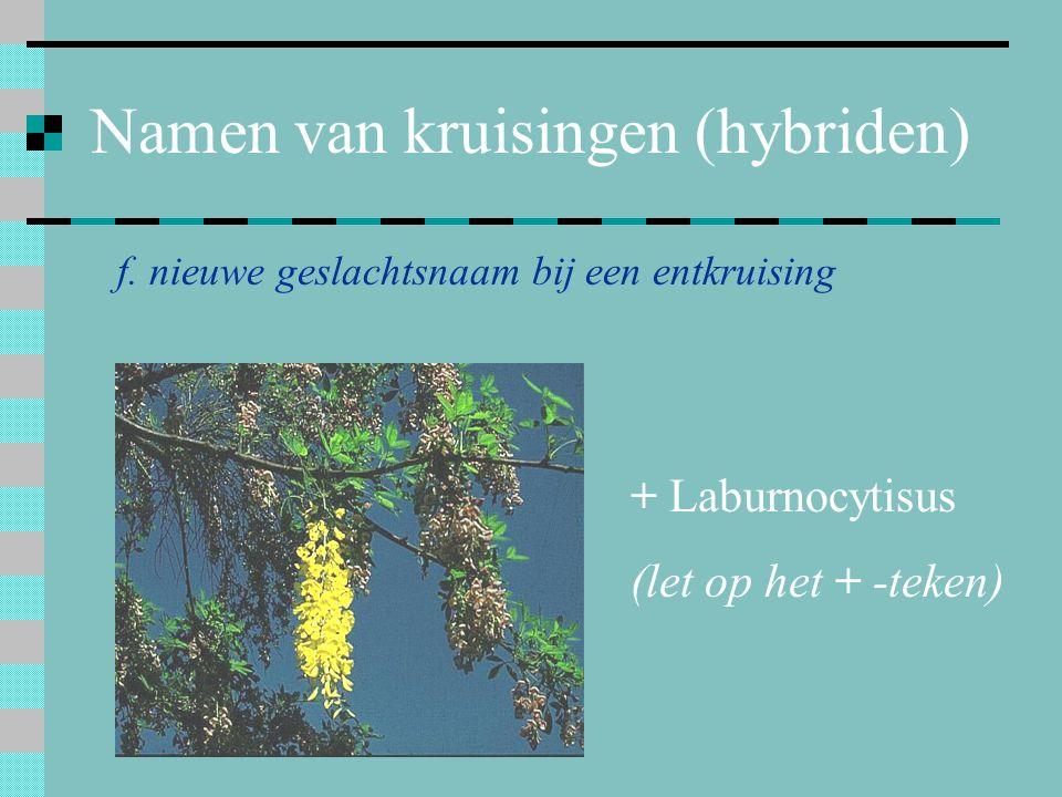 Namen van kruisingen (hybriden) f. nieuwe geslachtsnaam bij een entkruising + Laburnocytisus (let op het + -teken)