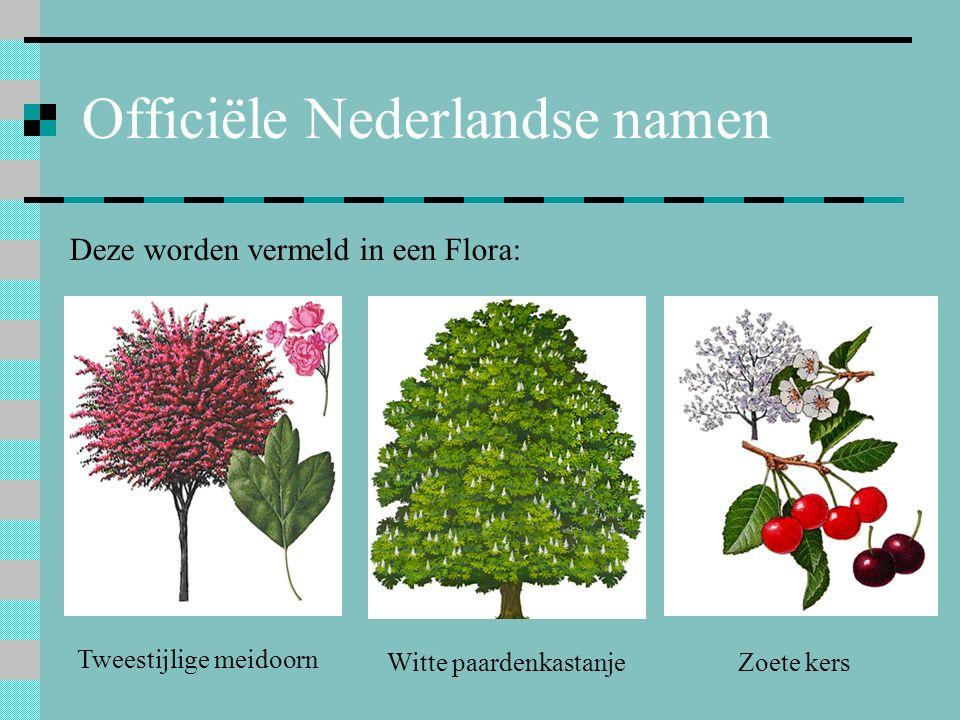 Officiële Nederlandse namen Deze worden vermeld in een Flora: Tweestijlige meidoorn Zoete kersWitte paardenkastanje