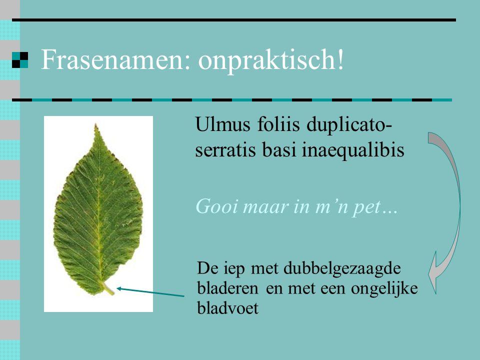 Frasenamen: onpraktisch! Ulmus foliis duplicato- serratis basi inaequalibis Gooi maar in m'n pet… De iep met dubbelgezaagde bladeren en met een ongeli