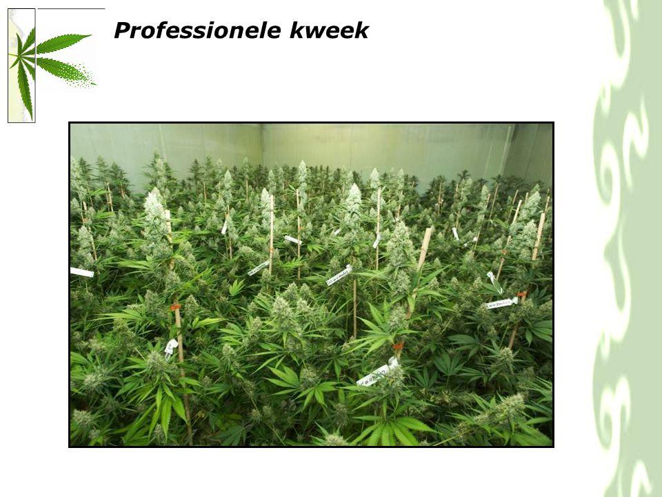 Professionele kweek