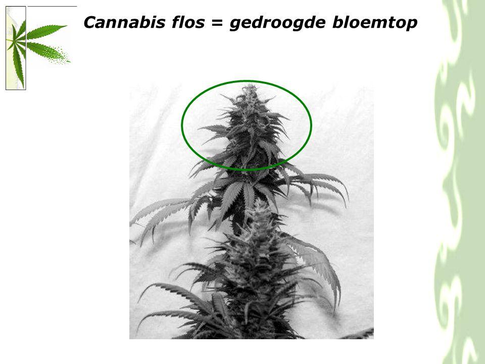 Klierharen produceren cannabinoiden