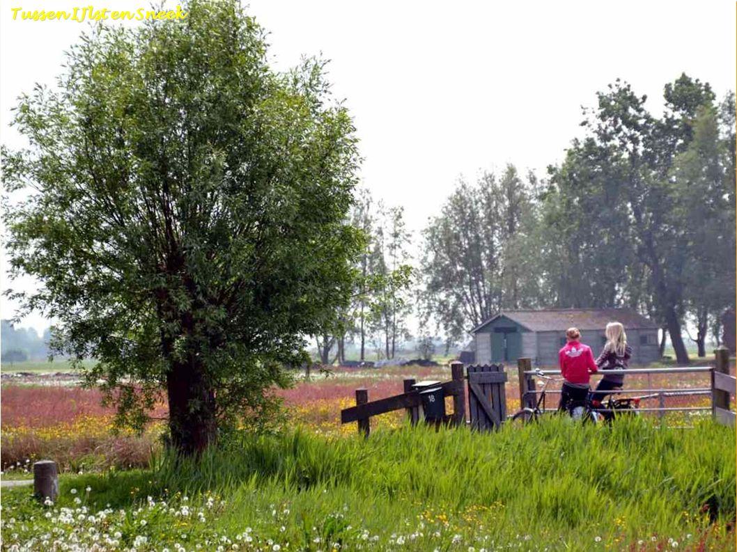 Warns Fr Warns Fr. Warns - Friesland