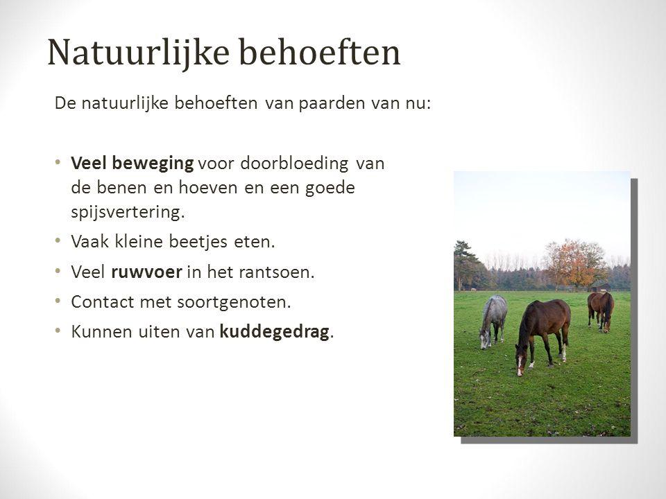 Natuurlijke behoeften De natuurlijke behoeften van paarden van nu: Veel beweging voor doorbloeding van de benen en hoeven en een goede spijsvertering.