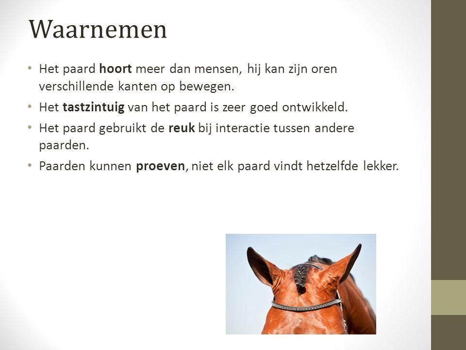 Waarnemen Het paard hoort meer dan mensen, hij kan zijn oren verschillende kanten op bewegen.
