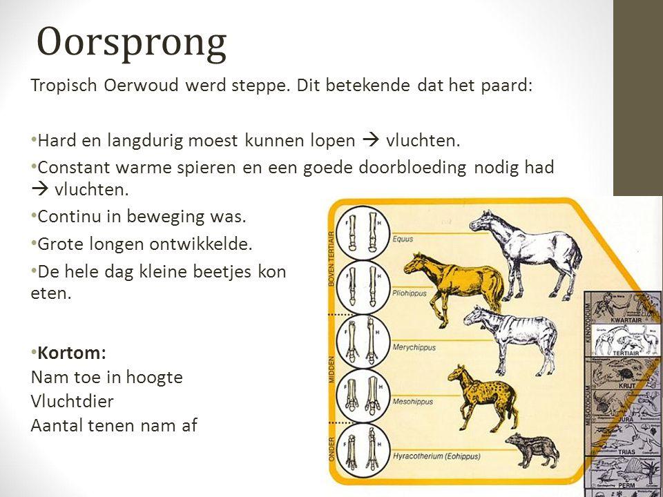 Oorsprong Tropisch Oerwoud werd steppe.