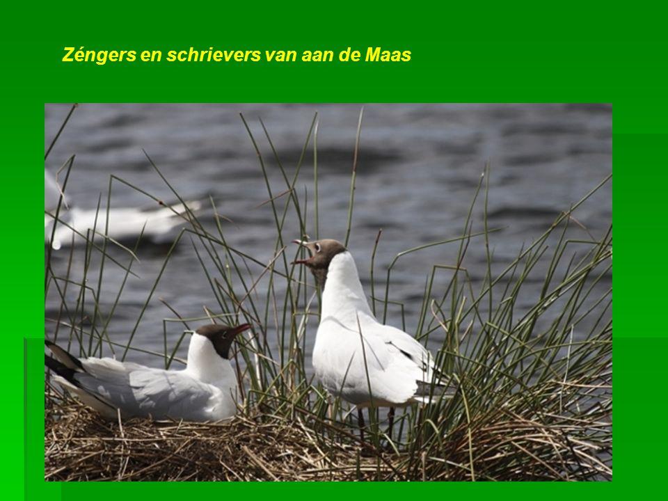 Bekinde schjilders van aan de Maas