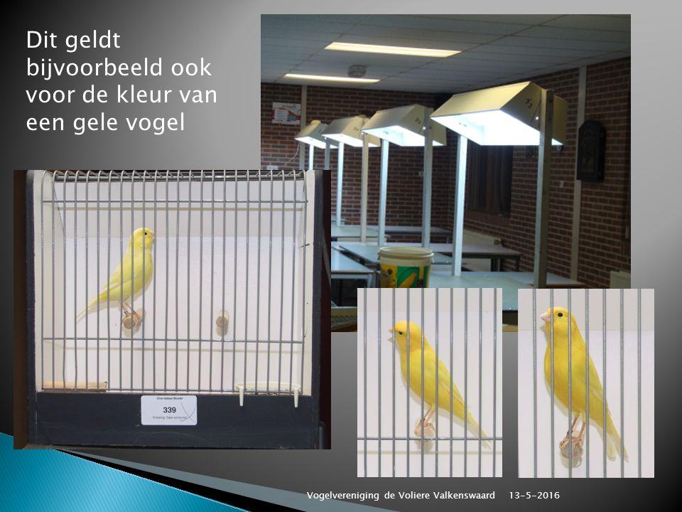 Dit geldt bijvoorbeeld ook voor de kleur van een gele vogel 13-5-2016 Vogelvereniging de Voliere Valkenswaard